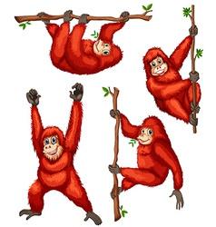 Orangutan vector image