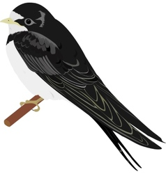 swallow vector image