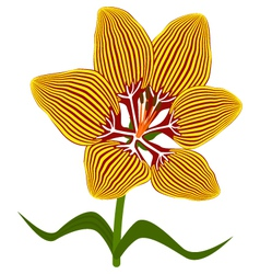 fire lily flower vector image