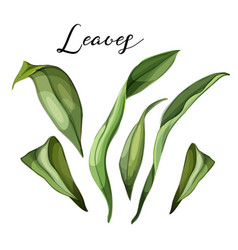 hand drawn lily leaves on branch set vector image