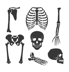 Human skeleton black set vector