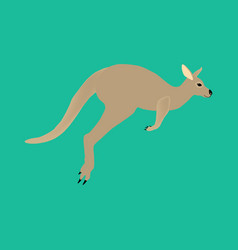 Kangaroo animal vector