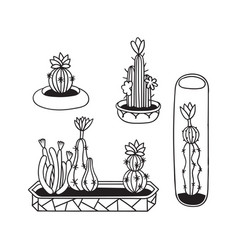 set cactuses for coloring books vector image