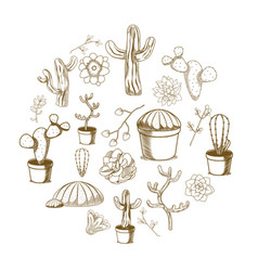 succulent and cactus desert plants hand drawing vector image