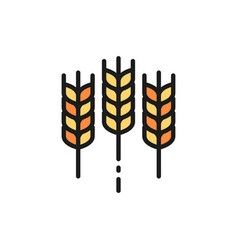 Wheat ear grain flat color line icon isolated on vector