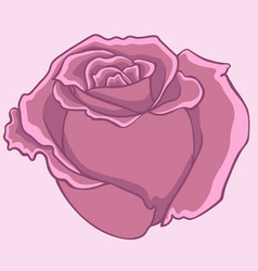 pink rose isolated flower isolated rose vector image