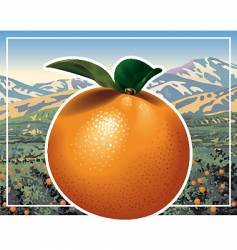 orange grove vector image