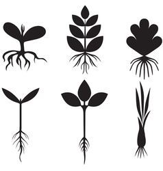 sprout set vector image