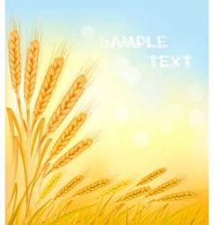 wheat ears vector image vector image