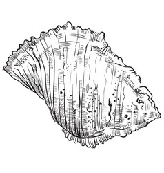 hand drawing seashell-18 vector image