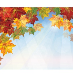 autumnal leaves on blue sky background vector image