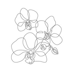 Beautiful orchids line art pattern exotic flowers vector