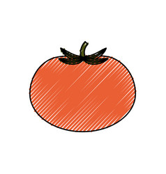 fresh tomato vegetable vector image