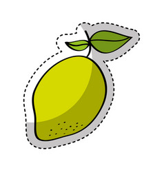 Mango fresh fruit drawing icon vector
