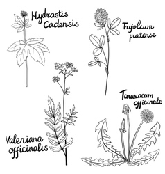 set of medical plants vector image