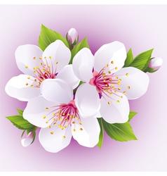 Blossoming sakura branch japanese cherry tree vector image