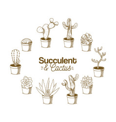 Cactus on pot hand drawing vector