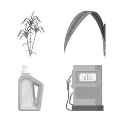 Design sugarcane and cane logo set of vector