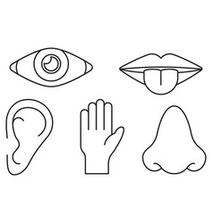 sense organs in lines style on white background vector image