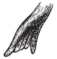 Foot of seal vintage vector