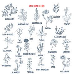 Set pectoral herbs vector