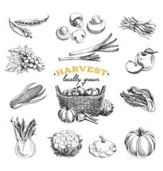 hand drawn sketch Harvest set vector image