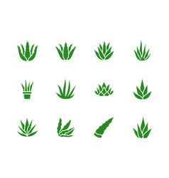 Aloe vera flat glyph icons succulent tropical vector