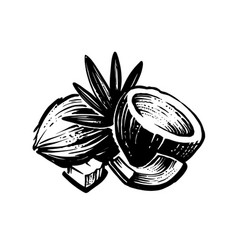 Black coconut sketch with palm leaf on white vector