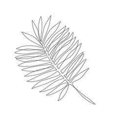 elegant continuous line drawing minimal art palm vector image