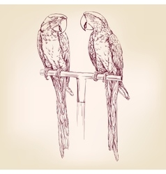 Parrot isolated hand drawn llustration vector image