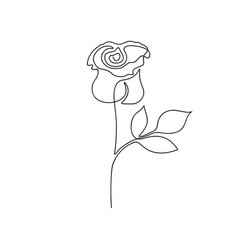 rose one line drawing continuous line rose flower vector image
