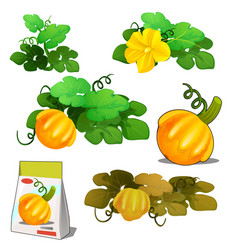 Set of stages of life of a agricultural plant vector