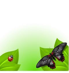 Summer background with butterfly and ladybird vector