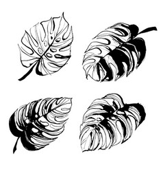 tropical monstera palm beach leaves hand drawn vector image
