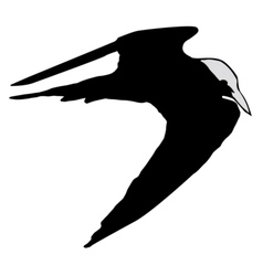 black silhouette of tern vector image