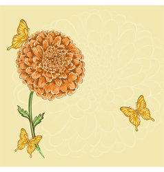 Chrysanthemum flower with flying butterflies vector