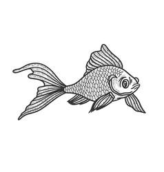 goldfish sketch vector image