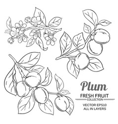 plum branches set vector image