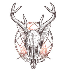 sketch deer skull with dreamcatcher and feather vector image