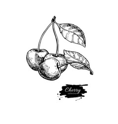 cherry drawing isolated hand drawn berry vector image