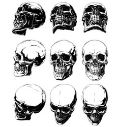 Detailed graphic black and white human skulls set vector