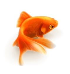 Goldfish photorealistic vector