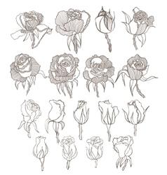 hand drawn roses set vector image
