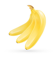 realistic banana vector image