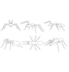 set with contours of ants in different points of vector image