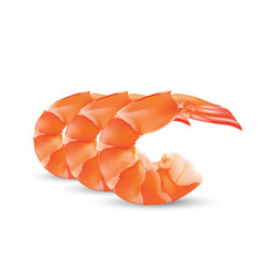 shrimp seafood prawn isolated vector image