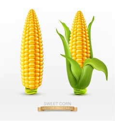 Two corn corn on the cob with leaves design elemen vector