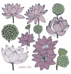 Water lily set of vector