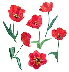 decorative flower set vector image vector image