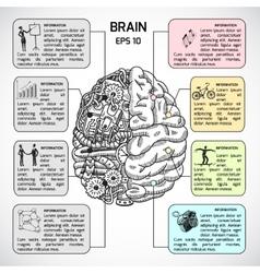 Brain hemispheres sketch infographic vector image vector image